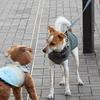 犬同士、お互いの年齢がわかるものなのだろうか。