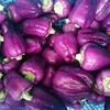 ミニパプリカ<紫>