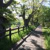 新緑の芹川遊歩道