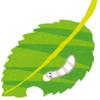 植物と昆虫の戦い