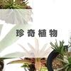 現在の珍奇植物たち