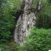 屋久島 雨でずぶ濡れの縄文杉トレッキング