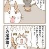 第34話「先住猫と保護猫のご対面 その2」猫漫画