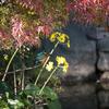 カワセミと紅葉と石蕗