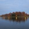 ここは東京!?水元公園メタセコイアの紅葉の見頃、観賞場所、アクセスは?