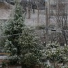 雪(*_*)
