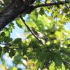 善福寺公園の野鳥 エゾビタキ・メボソムシクイ他 2021年10月3日