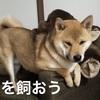 柴犬の可愛さに魅せられて 〜柴犬生活を送る〜