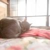 猫の温度感知機能は意外と鈍い?