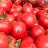 ブカマッシモで食べた石山農園「幻のトマト」