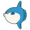 魚のほうのマンボウ