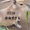 何だここ…楽園か?静岡県の伊豆シャボテンどうぶつ公園が想像以上だった。