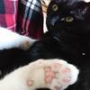今日の黒猫モモ&白黒猫ナナの動画ー871