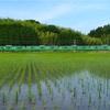 緑の中の緑編成  草津線で113系の撮影