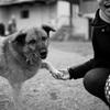 愛犬とできるだけ長く居たいというのはワガママなのか