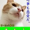 【猫ブログ】むーちょん家 総選挙 no.2 たかし