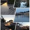 水辺の桜と夕暮れ