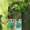 【家庭菜園】ほうれん草、小松菜、ミズナを植えました。