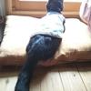 扁平上皮癌になった愛猫を、天にお返しした⑩