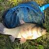 沼のような用水路には…大きな魚が潜んでいました。