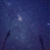 【ミーコラ】見上げてごらん夜空の星を