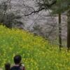 和宏さんの花巡礼「仁淀の桜」 中越のしだれ