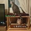 しるびぃあ&まめ~猫カフェに行く