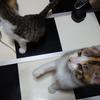 ゼルメアと猫のお婆ちゃんの話