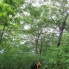 ◆5/28      摩耶山~関川コース④