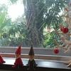 屋久島ボンボンポイ第51+2回 リンゴ可愛や第9回 ノマドカフェ リンゴにはやっぱり紅茶