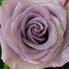 ハロウィンの魔法のお花