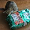 ようやく沖縄で見つけた・・・ピュリナワン「美味を求める成猫用サーモン」!