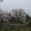 徳島一本桜めぐり その2