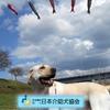 170506 介助犬フェスタ2017