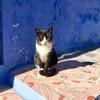 シャウエンからCTMのバスでフェズへ!さらばシャウエンの猫たち(世界の猫探し228~232匹目)
