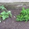 秋冬野菜と生りもの♪