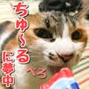 ちゅ〜るに夢中な猫!猫3姉妹の末っ子'あんず'