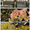 西安交通大学と興慶宮公園の3月中旬春景色(2018/3/28:補足)
