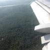 今、熱帯雨林で何が起こっているか