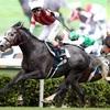 2019香港シリーズ日本馬評価1