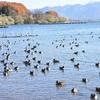 野鳥撮影日記(令和元年11月⑥)