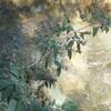 木の枝と川