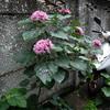 路地に咲いていた花