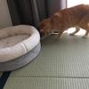 うちの猫、クモと出会う