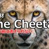 新教材「The Cheetah」の発売はいつ?とのお声をいただいています。