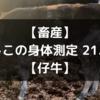 【畜産】よしこの身体測定 21.2月【仔牛】