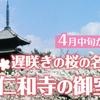 御室桜が美しい京都を代表する遅咲き桜の名所である仁和寺の桜