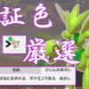 【ポケモン剣盾】シンボル厳選で証持ち色違いをゲット!