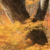 大白川の秋景色 Vol 4