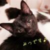 ★保護猫紹介★みつちゃん★